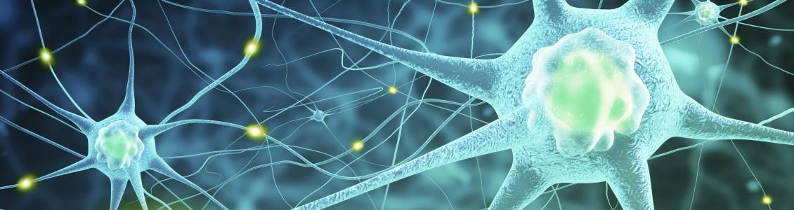 Scientific image of neurons