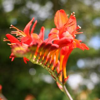 Bright red and orange coloured flower