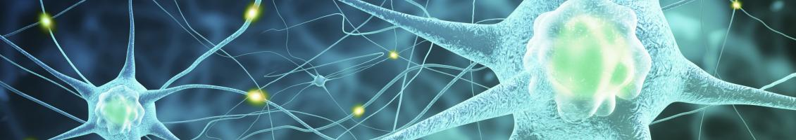Scientific image of neurons
